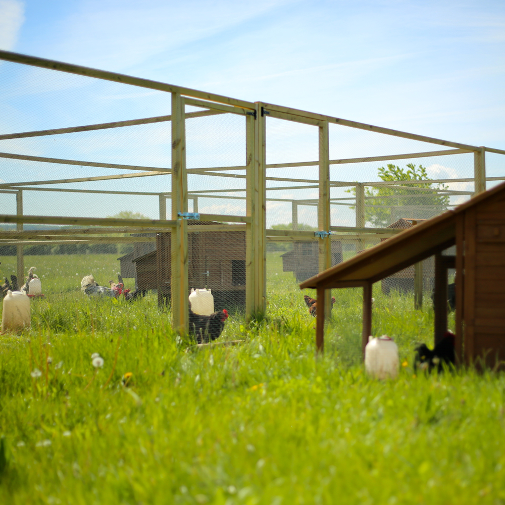Economic Impact of Transitioning from Gestation Stalls to ...
